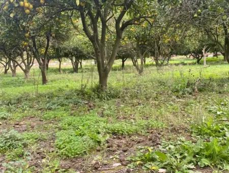 Commercial Zoned Land For Sale In Atakoy