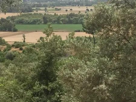 Plot With Sea Views For Sale In Akyaka